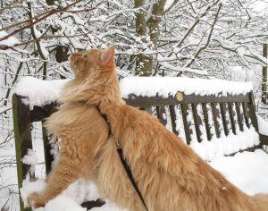 Gartenbank im Schnee