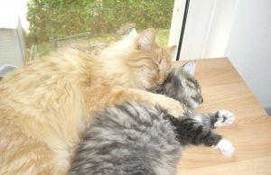 Ronja + Jessie schlafend